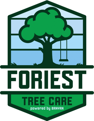Foriest Tree Care